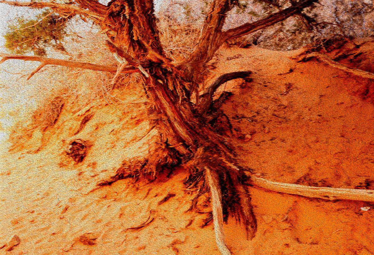 _FPB7339ARCHES NAT PARK TREE TRUNK